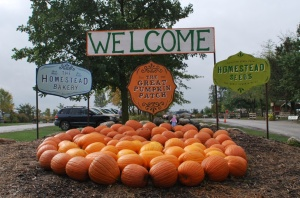 Welcome to the Great Pumpkin Patch