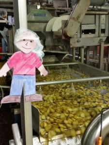 Flat Aggie checks out one of our cutting machines. This one is cutting whole pickles into hamburger dill chips.