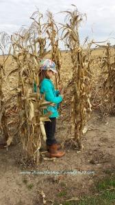 Picking & Shucking Corn