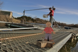 Flat Aggie helps owner,  Bill Timpner feed fish.