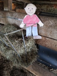 Figure 4. Aggie standing in a hay feeder.