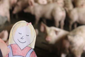 meeting the pigs