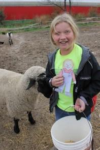 meeting the sheep