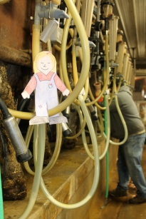 In milking parlor